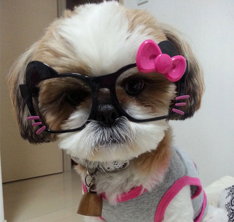 Female Shih Tzu Dog Names Dog Names Female Dog Names Shih Tzu