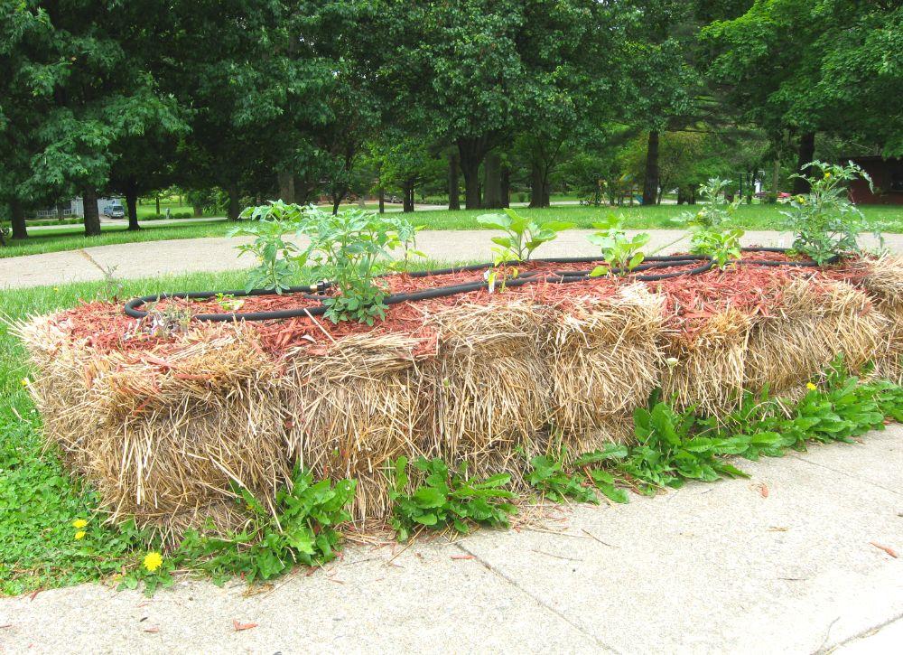 19 Zero Dollar Garden Hacks Straw Bale Gardening Gardening Tips Hay Bale Gardening