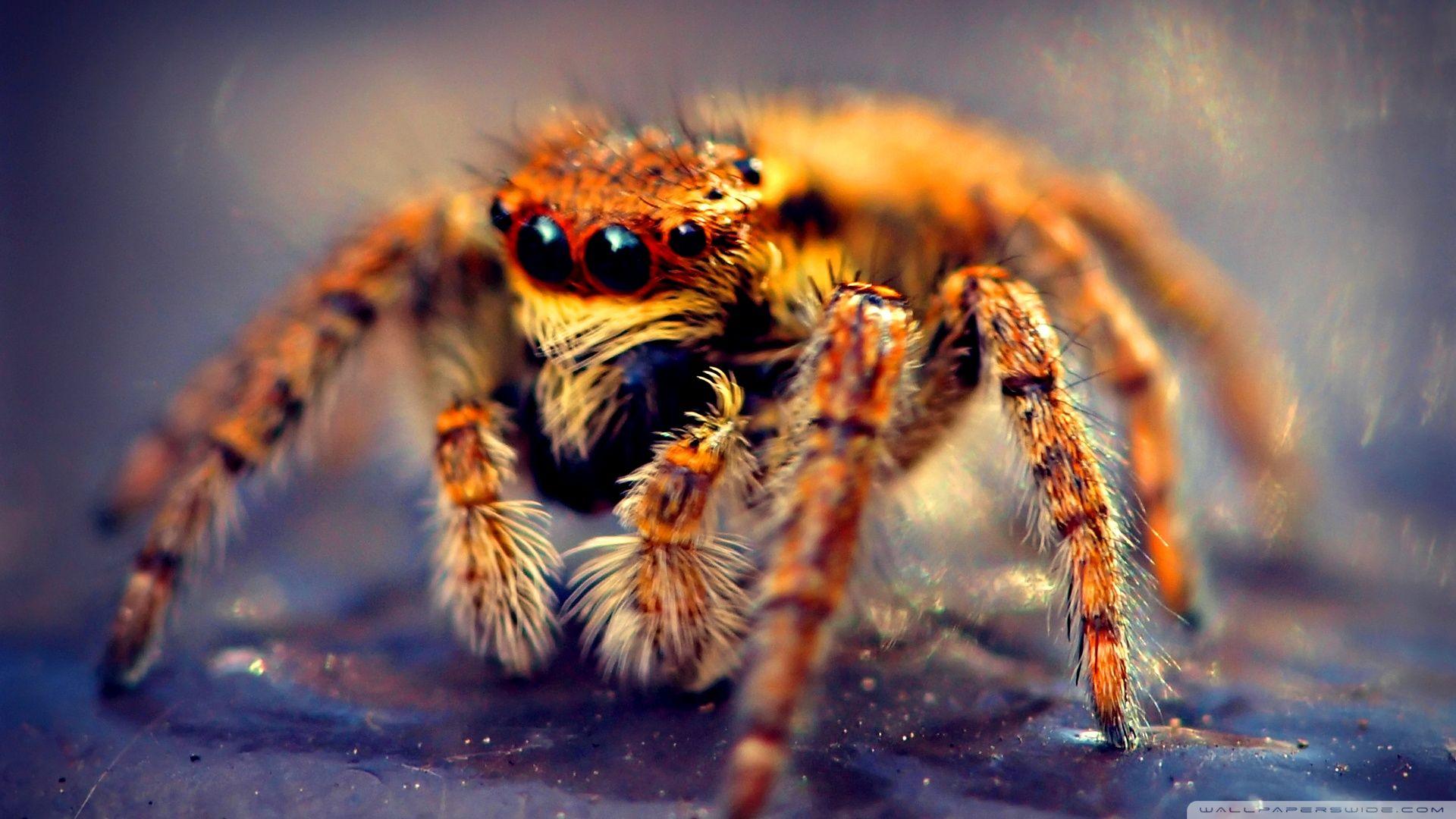 Spider Macro Hd Desktop Wallpaper Widescreen High Definition Spider Animals Animal Wallpaper