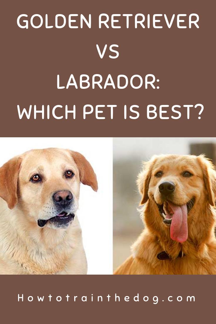 Golden Retriever Vs Labrador Which Breed Makes A Better Pet For You Goldenretriever Labrador Golden Retriever Vs Labrador Retriever Labrador Puppy