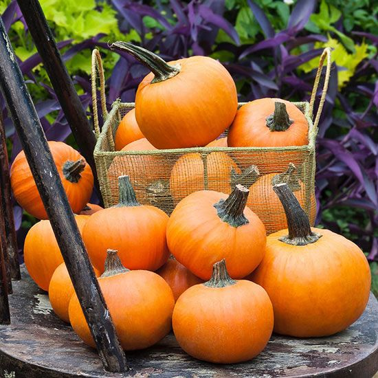 Pumpkins Containing one of the richest supplies of carotenoids, just a half-cup serving of pumpkin gives you more than two times the recommended daily dose of alpha-carotene. Not only is the flesh good for you, but so are the seeds. For smaller gardens, we like 'Wee B Little' pumpkin from Bonnie Plants. This variety has a semibush habit so it doesn't need a ton of room, and the fruit is versatile.