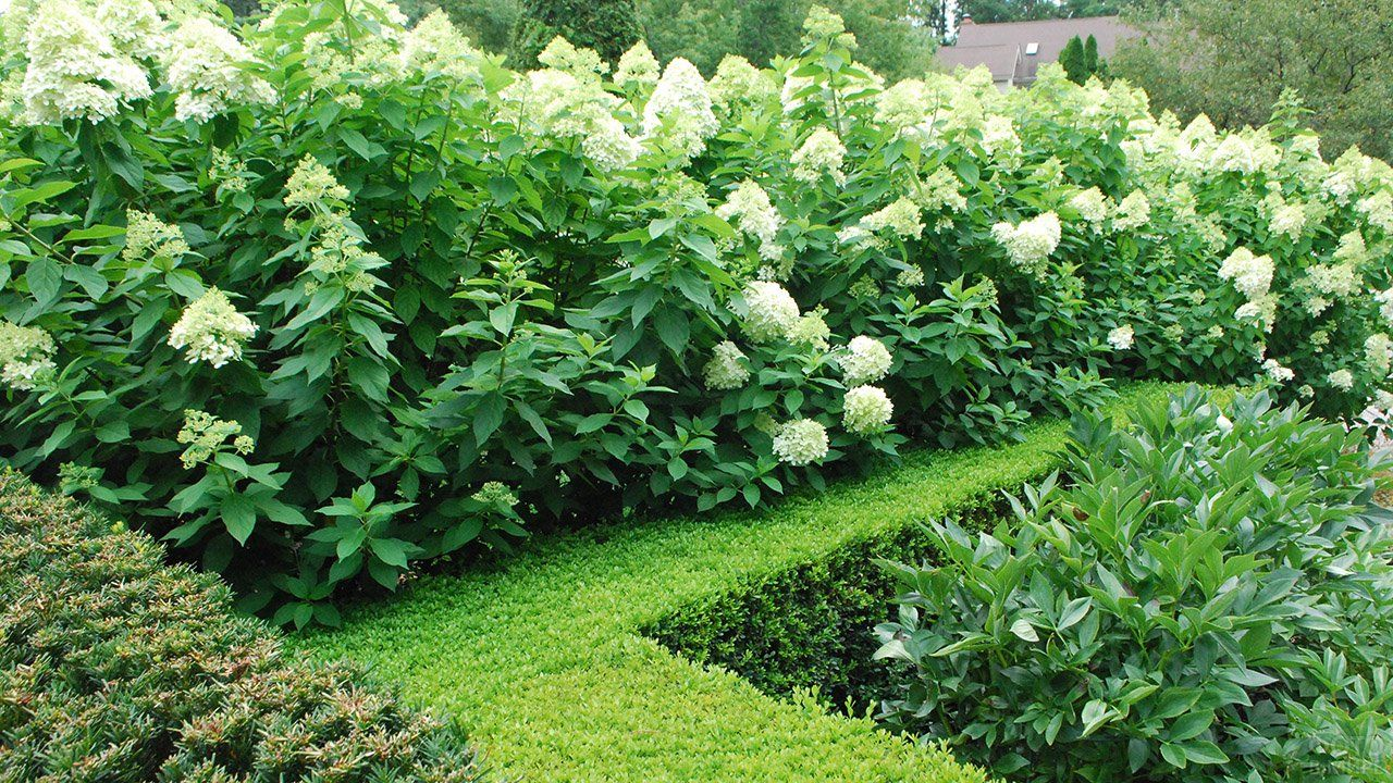 кустарники сада и огорода
