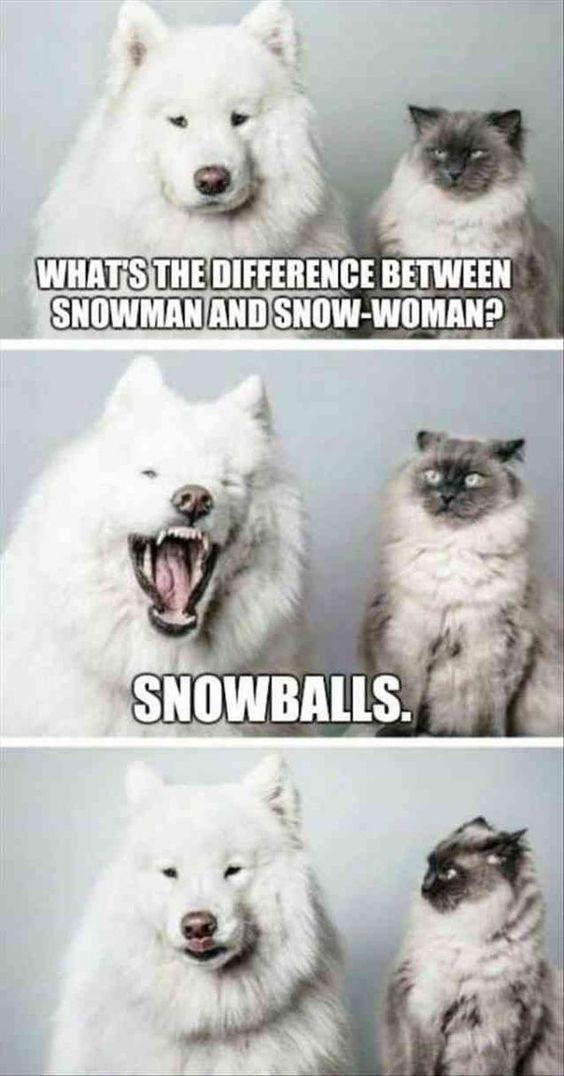 Photo of 20 divertidos memes de animales que te hacen reír – ríe tanto como puedas, por favor – kelly blog