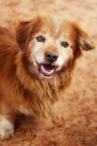 All Adoptable Animals Animals Animal Sanctuary Dog Adoption