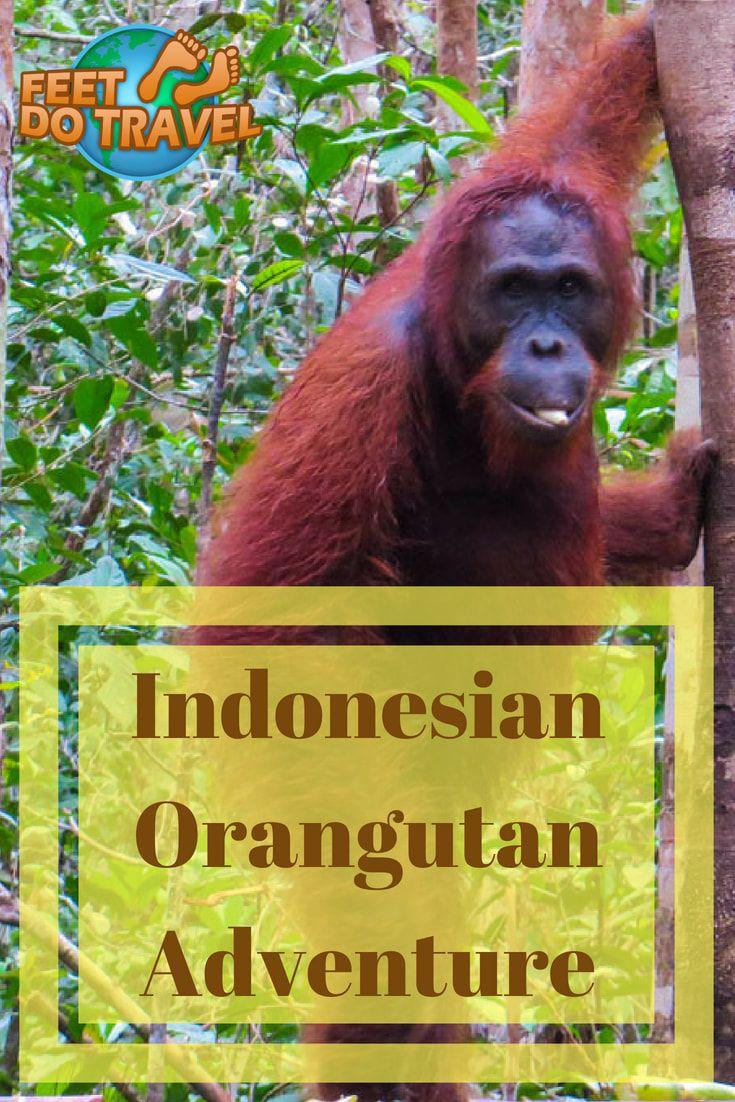 Indonesian Orangutan Adventure Asia travel, Travel