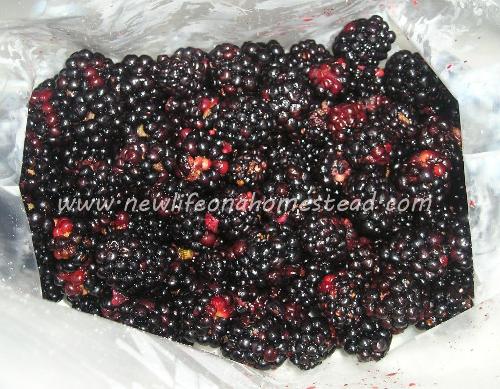 How To Get Worms Out Of Blackberries Blackberry, Storing