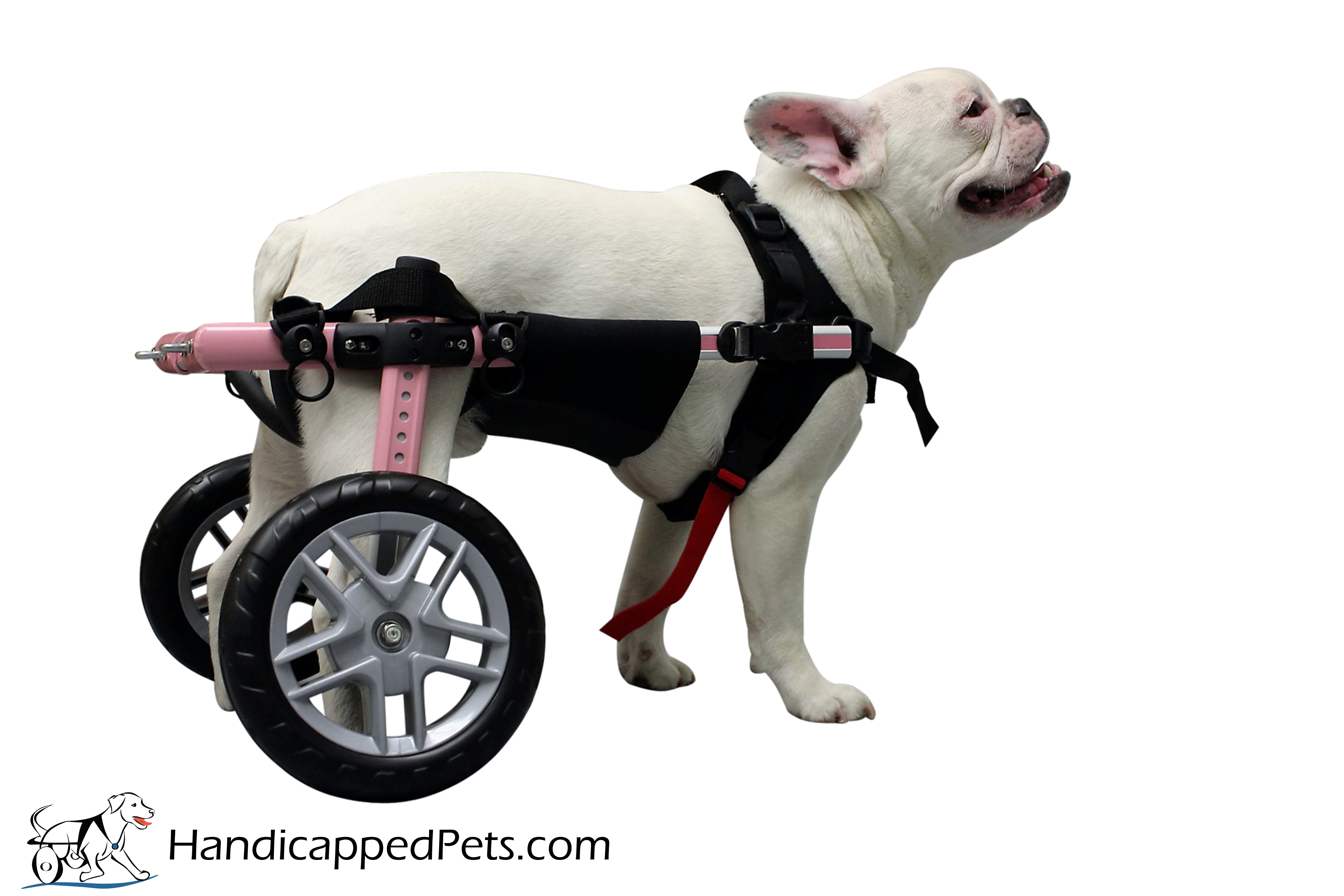 Dog Wheelchair Support Dog Wheelchairs Dog Carts Handicapped Pets Canada Support Dog Dog Wheelchair Pets