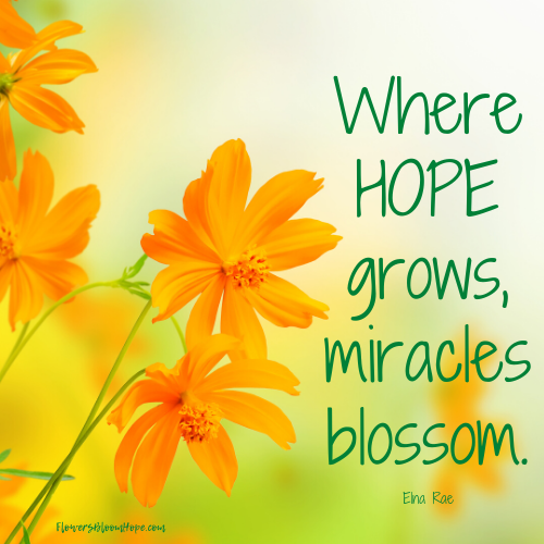 Where Hope Grows Miracle Quotes Hope Quotes Flower Quotes