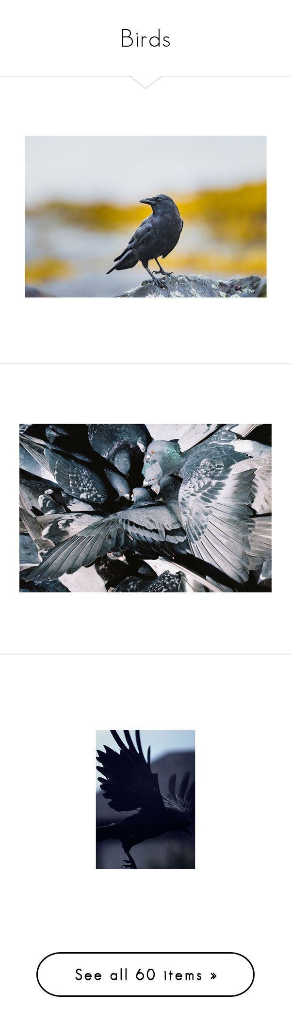 """""""Birds"""" by fandoms-have-eaten-my-soul ❤ liked on Polyvore featuring backgrounds, images, aesthetic, animals, photos, pictures, pics, intimates, angel and home"""