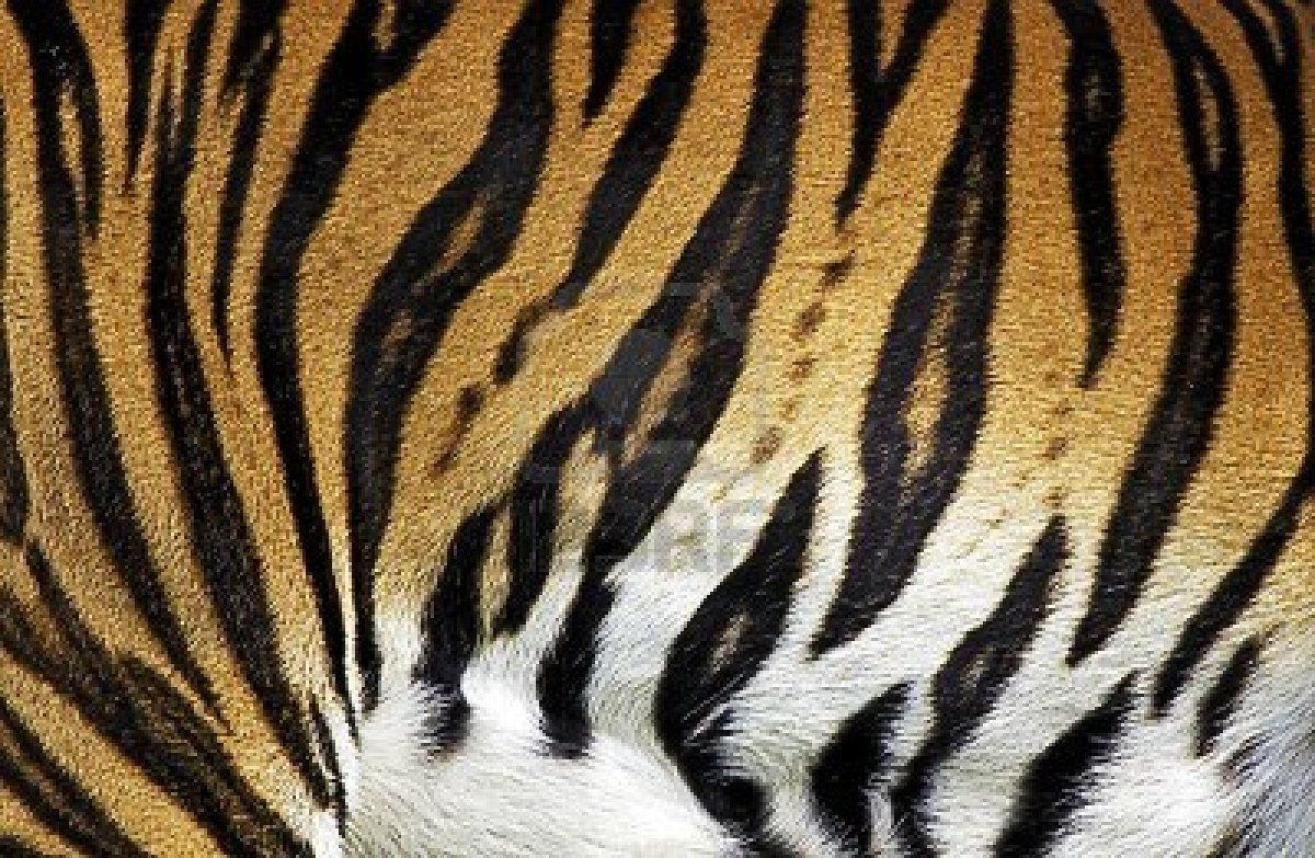 Tiger Fur | Animal Textures in 2019 | Tiger fur, Stuffed ... - photo#22