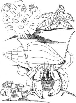 Hermit Crab And Star Fish Fish Coloring Page Coloring Pages