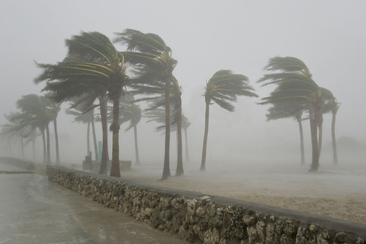 Arcoinquilino Jpg 1181 787 Hurricane Supplies Palm Trees Hurricane