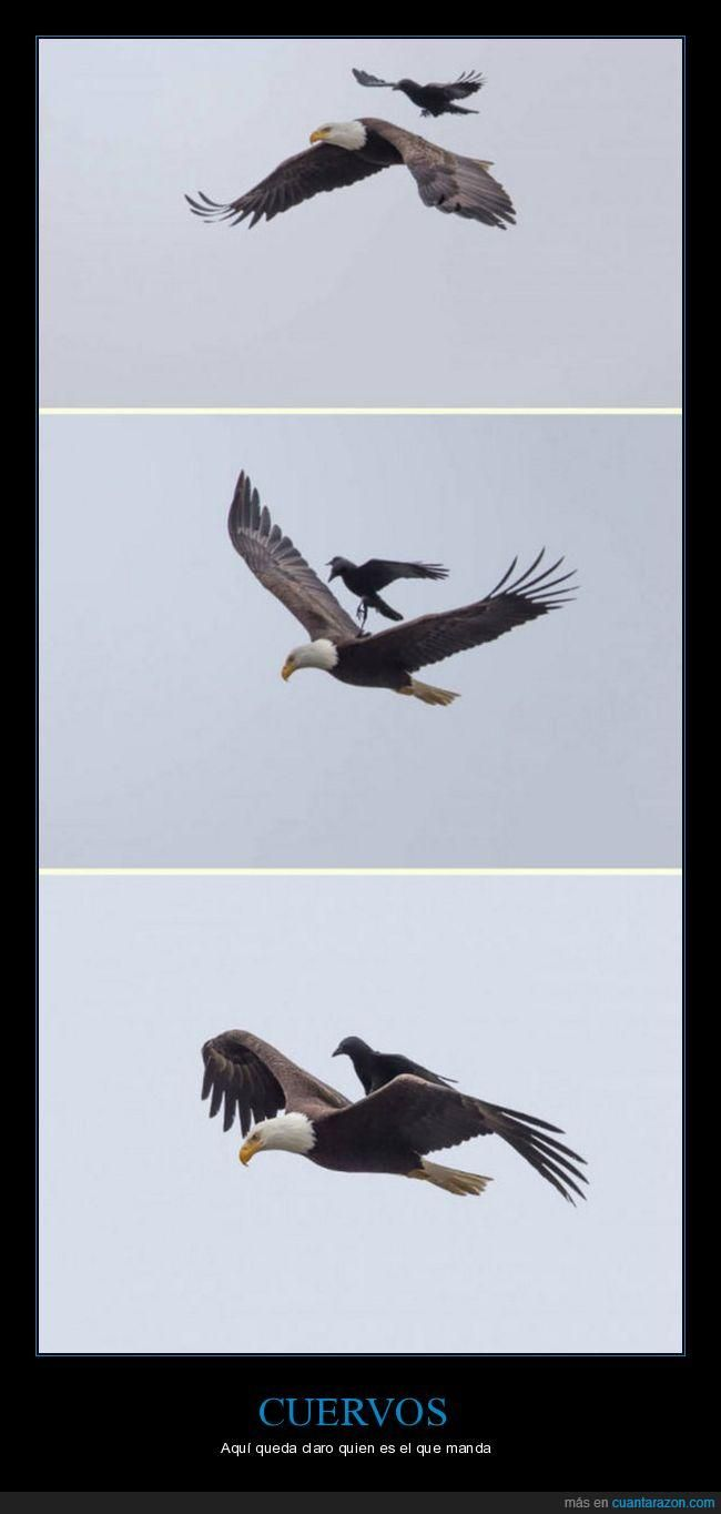 Cría cuervos...