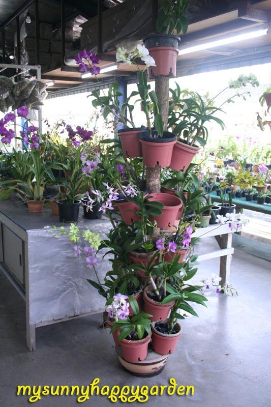My Sunny Happy Garden Tips From United Malaysian Orchid Stacked Flower Pots Flower Pots Orchids