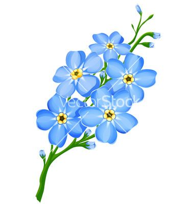 Forget Me Not Flowers Vector Art Download Green Vectors 54844 Flower Drawing Forget Me Not Tattoo Flowers
