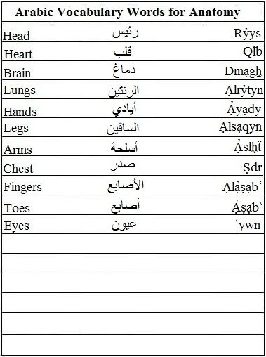 Arabic Vocabulary Words for Anatomy - Learn Arabic | Importance of ...