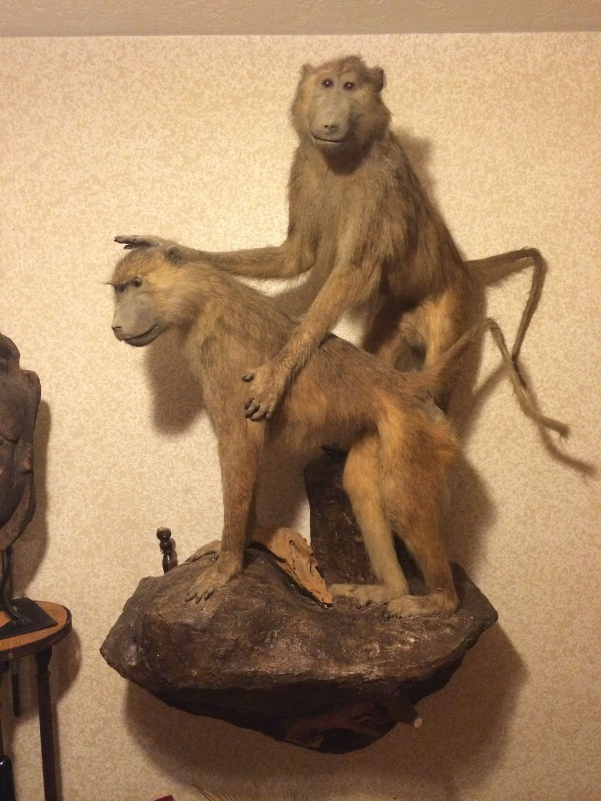 taxidermy white monkey meme