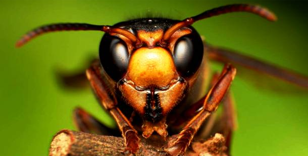 25 Amazing Close Up Photographs of Insects Viralifying