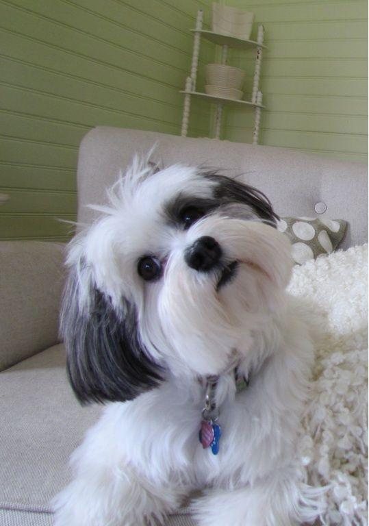 Why Do Dogs Tilt Their Heads? - DogTime