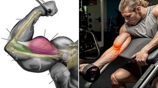 How to grow biceps muscles fast