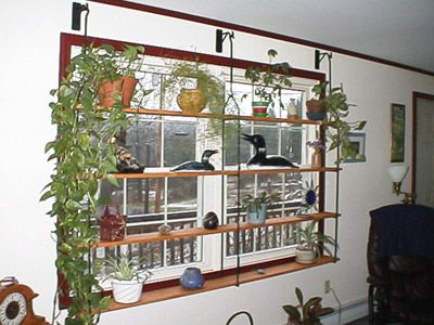 Window treatment window display wrought iron home d cor - How to hang plants in front of windows ...