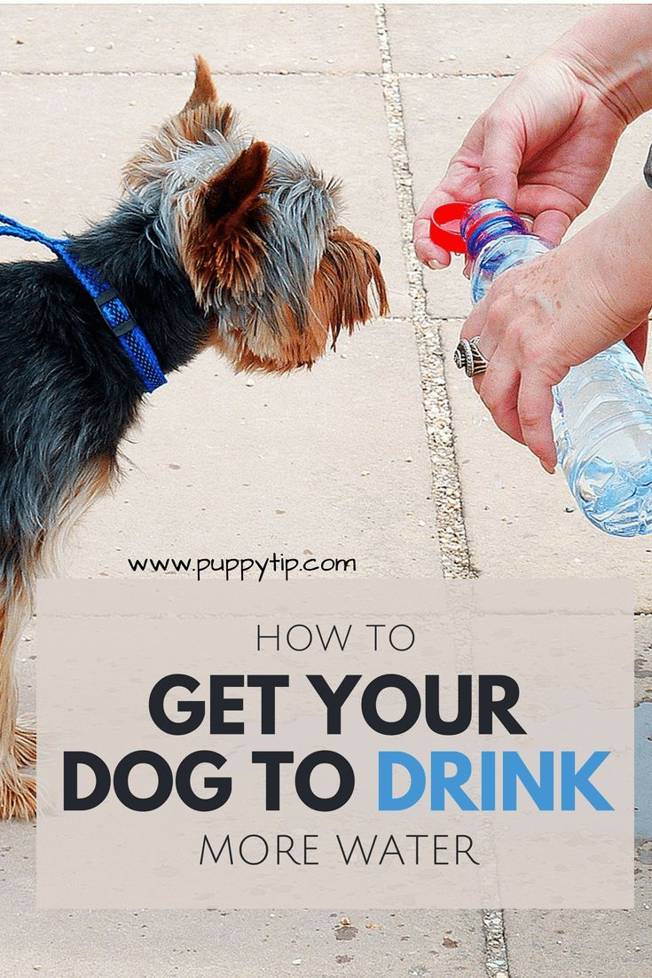 How to get your dog to drink more water 13 helpful tips