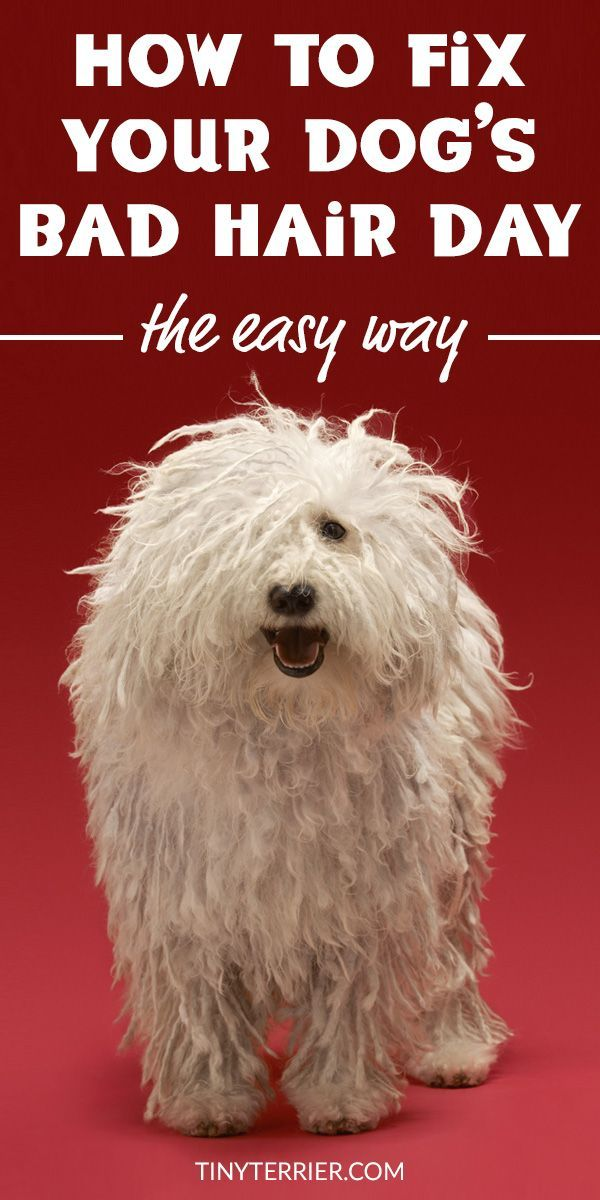 How To Groom A Dog That Hates Being Groomed With Images Dog Health Tips Dog Grooming Tips Dog Grooming