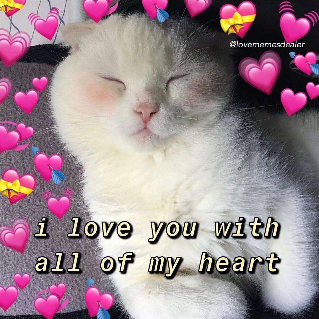 Siempre te amo💖 in 2020 | Love you meme, Cute animal memes ...