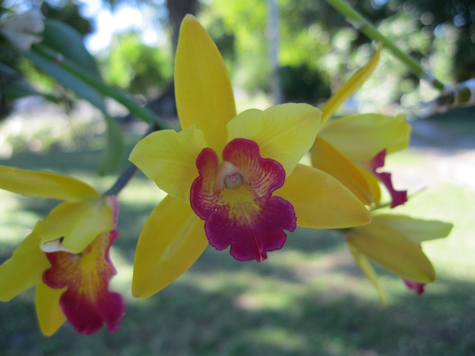 Orchid Visions at the Edison & Ford Winter Estates in Fort Myers, FL ...