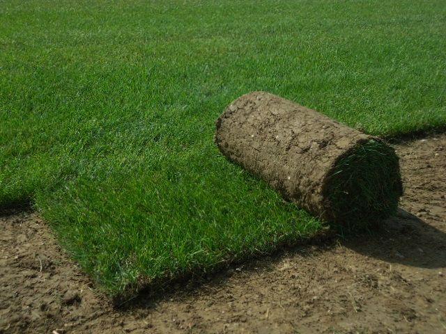 Les 25 meilleures id es de la cat gorie rouleau pelouse sur pinterest - Gazon en rouleau truffaut ...