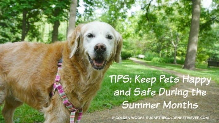 TIPS: Keep Pets Happy and Safe During the Summer Months | Petco