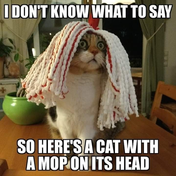 i don't know what to say so here's a cat with a mop on its ...