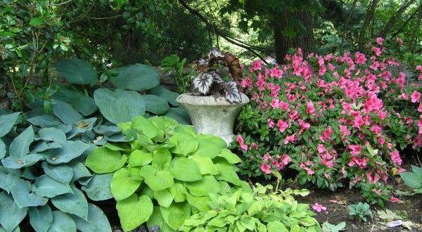 Blumen Für Den Schattengarten - Gartenmagazine.de | Endlich Ein ... Welche Blumen Im Schatten Garten Pflanzen