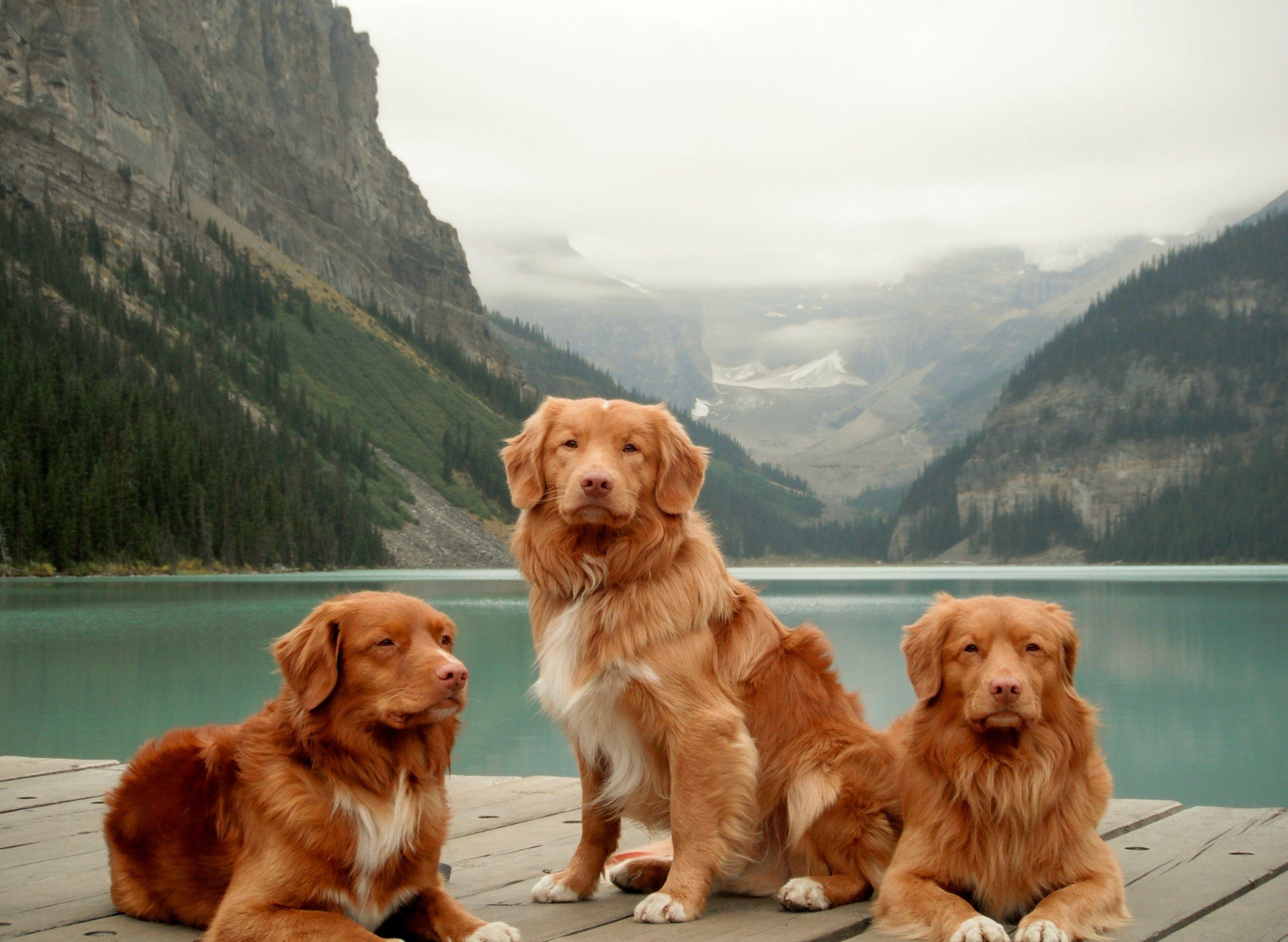 Acadia Veterinary Clinic and Pet Rehabilitation Centre
