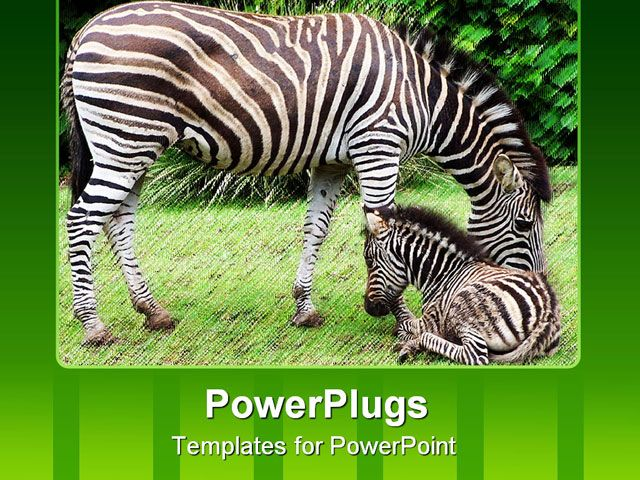 Pink and zebra templates free powerpoint template about animals pink and zebra templates free powerpoint template about animals baby family toneelgroepblik Image collections
