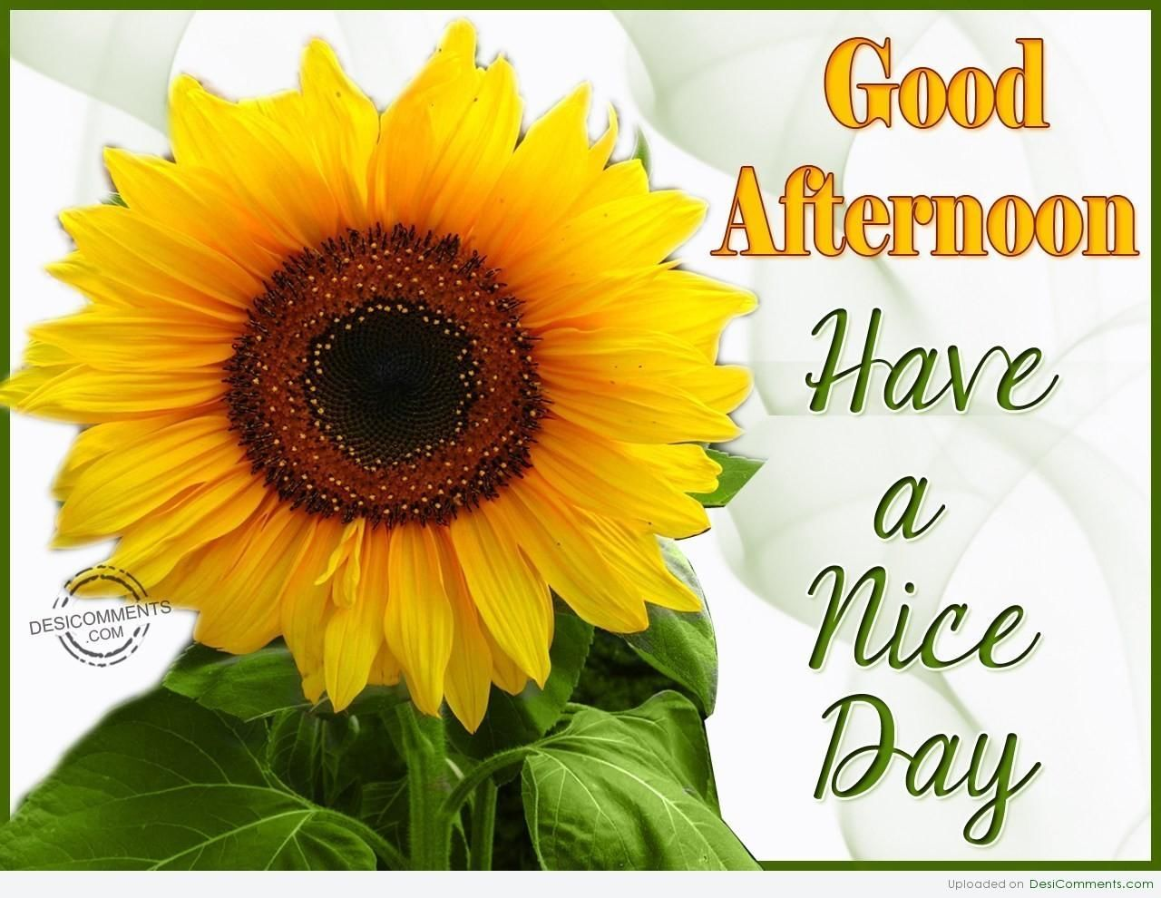 Good Afternoon Have A Nice Day Friends Good Afternoon Quotes