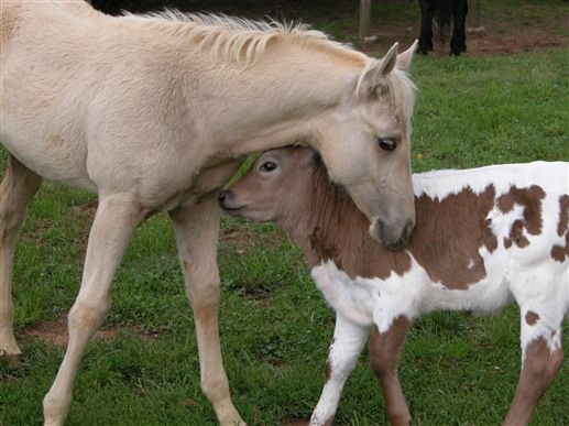 Seventy Four Ranch In Jasper Georgia B B Rental Barnyard Animals Horses Majestic Horse
