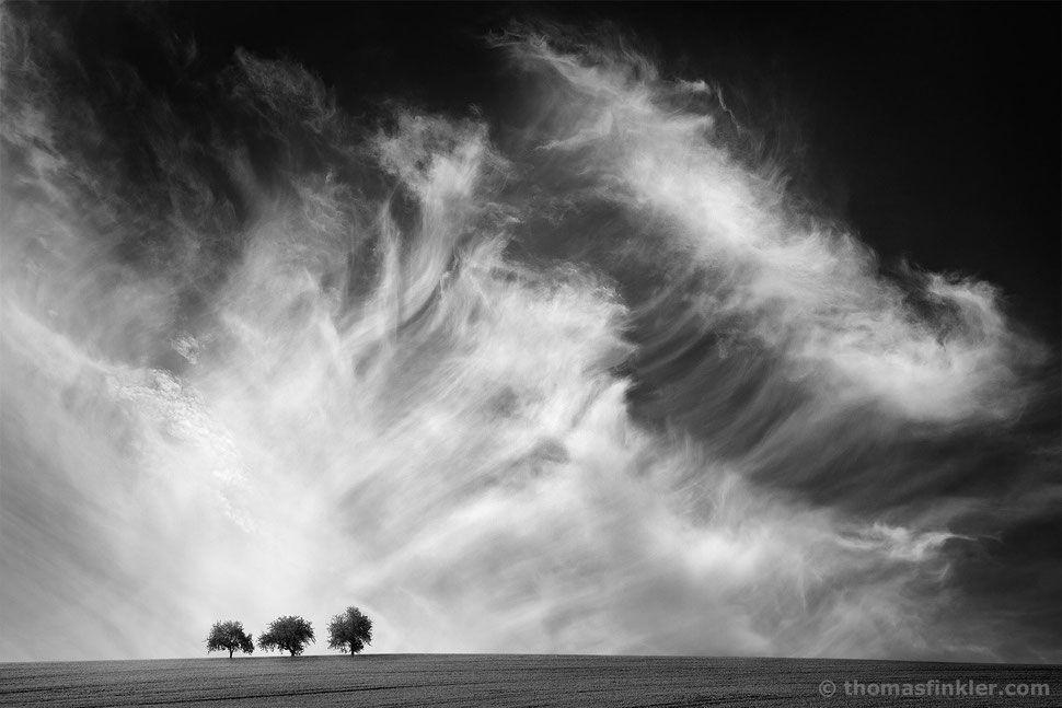 Fine Art Photography Black And White Landscape Minimal Wall Art Trees Cloudscape Sky C Black And White Landscape White Photography Fine Art Photography