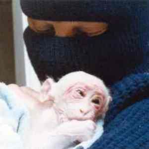 This is Britches the monkey in the arms of her A.L.F. rescuer. She was rescued from a lab at UCLA. Researchers had sewn her eyes shut, and she had been kept in isolation for an undetermined period of time. I can't express strongly enough my praise for her rescuer and my rage against her tormentors.