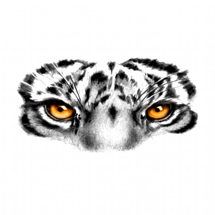 Eye Of The Tiger Tattoo Tiger Eyes Tattoo Tiger Tattoo Tiger Tattoo Design