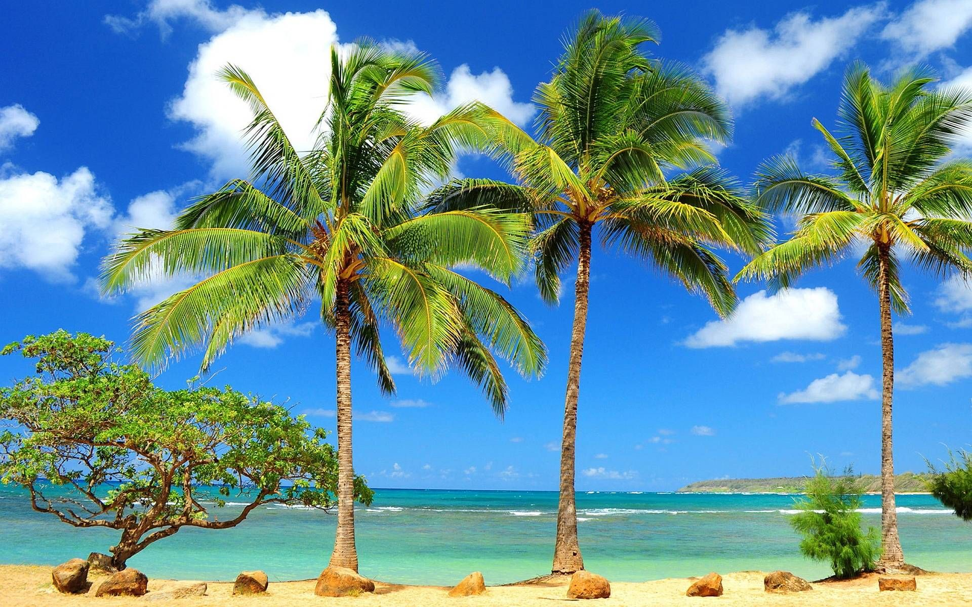 full hd p palm trees wallpapers hd desktop backgrounds 1600 1200 full hd p palm trees wallpapers hd desktop backgrounds 1600 1200 palm tree wallpaper