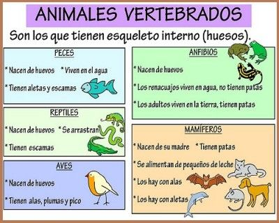 Los Animales Vertebrados E Invertebrados Clasificacion Science Experiments Kids Elementary Teacher Development Science And Nature