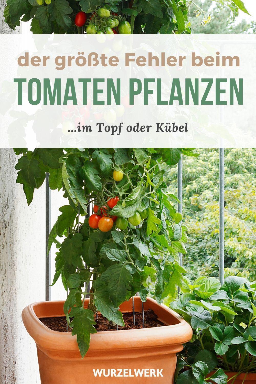 Tomaten Im Topf Pflanzen Die 11 Wichtigsten Schritte Wurzelwerk In 2020 Tomaten Im Topf Garten Hochbeet Tomaten Garten