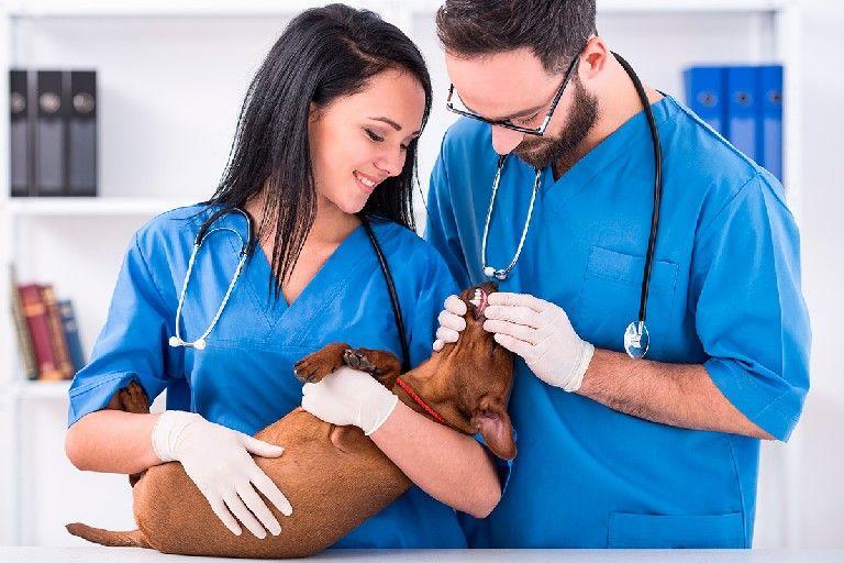 SGSST | Medidas de seguridad personal de medicina veterinaria ...