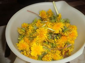 Frugal Living on the Watkins Ranch: Dandelion Jelly