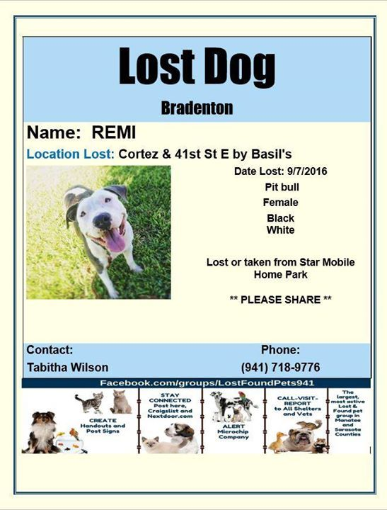 Please Rt Have You Seen Remi Missing Lost Pet In Bradenton Fl Http Bit Ly 2ezdtuv Losing A Dog Mobile Home Parks Manatee County