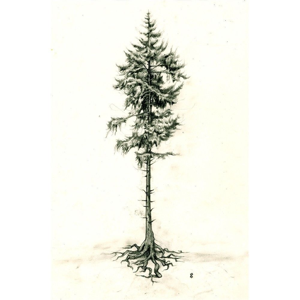 Find This Pin And More On Pencil  Tree Sketching Methods