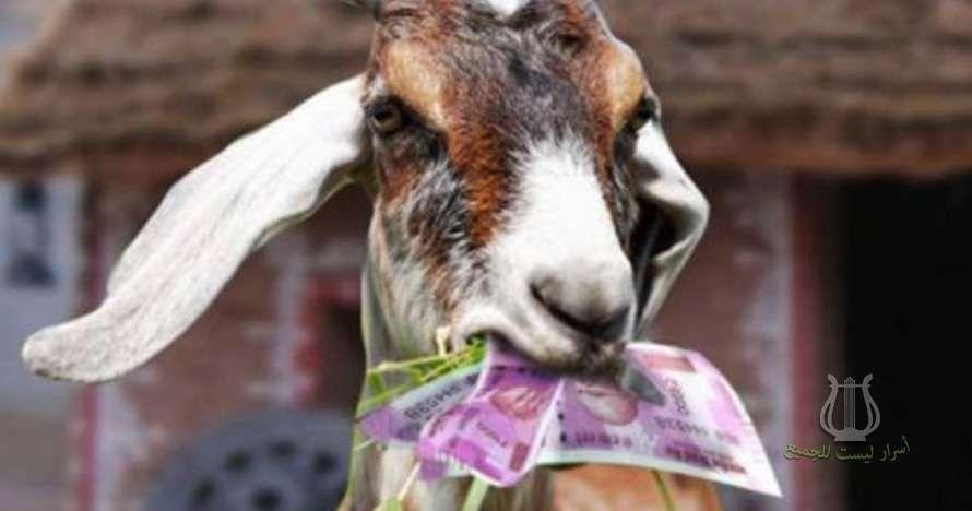 ماعز بـ 20 ألف يورو تم طهيها من صاحبها انتقاما منه Goats Hungry Animals