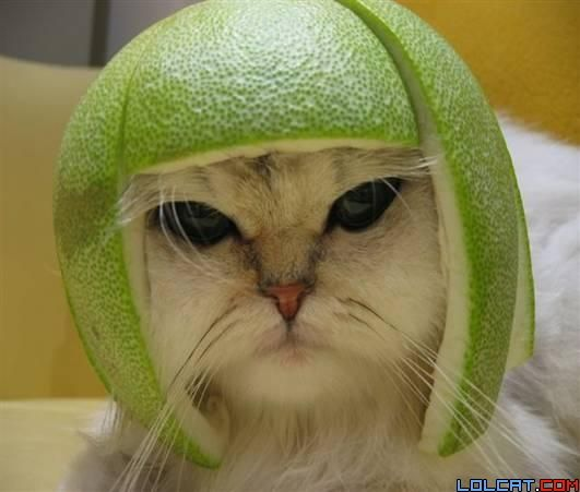 limeheadkitty