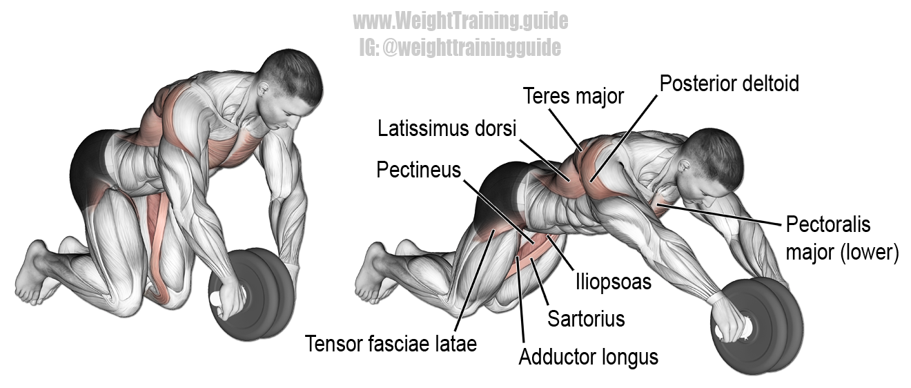 Wheel rollout exercise instructions and video core for Plank muscles worked diagram